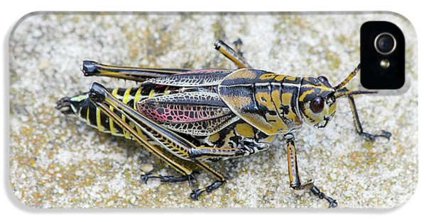 The Hopper Grasshopper Art IPhone 5s Case by Reid Callaway