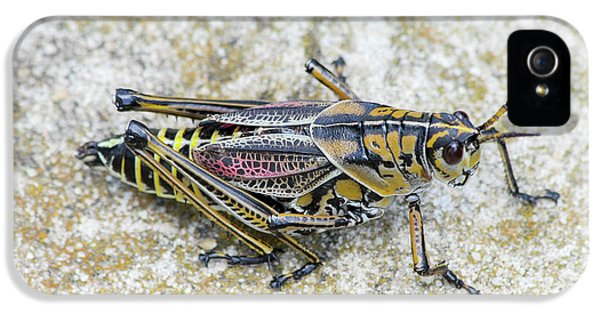 The Hopper Grasshopper Art IPhone 5s Case by Reid Callaway