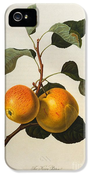 The Kerry Pippin IPhone 5s Case by William Hooker
