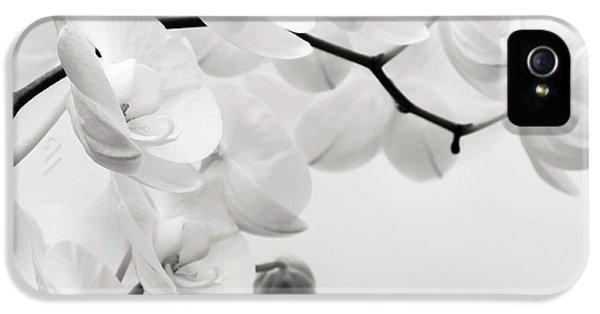 Orchid iPhone 5s Case - The Last Orchid by Wim Lanclus