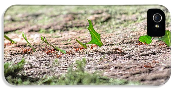 The Leaf Parade  IPhone 5s Case by Betsy Knapp