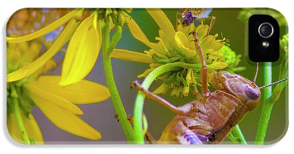 Grasshopper iPhone 5s Case - The Little Things by Betsy Knapp