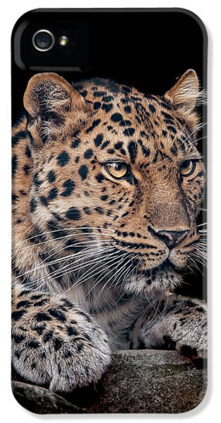 Leopard iPhone 5s Case - The Night Watchman by Paul Neville