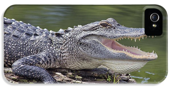 Alligator iPhone 5s Case - The Power Of Vulnerability  by Betsy Knapp