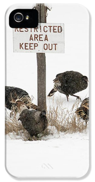 The Turkey Patrol IPhone 5s Case by Mike Dawson