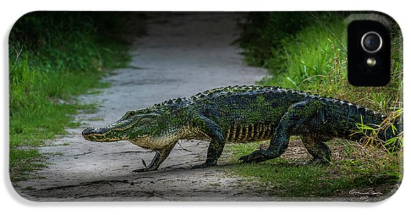 Alligator iPhone 5s Case - This Is My Trail by Marvin Spates