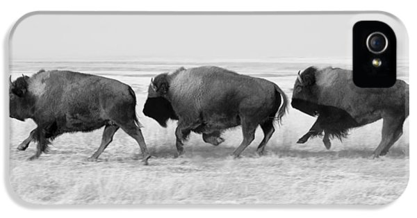 Three Buffalo In Black And White IPhone 5s Case by Todd Klassy