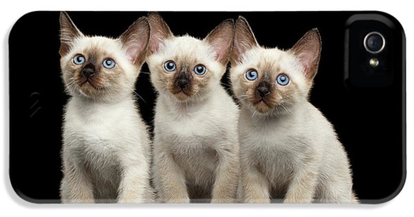 Cat iPhone 5s Case - Three Kitty Of Breed Mekong Bobtail On Black Background by Sergey Taran