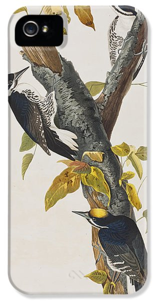 Three Toed Woodpecker IPhone 5s Case