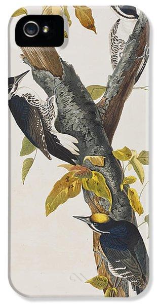 Three Toed Woodpecker IPhone 5s Case by John James Audubon