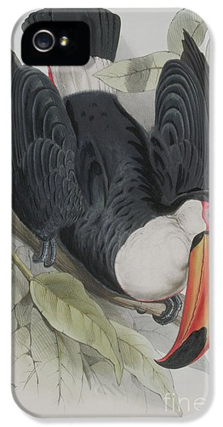 Toco Toucan IPhone 5s Case