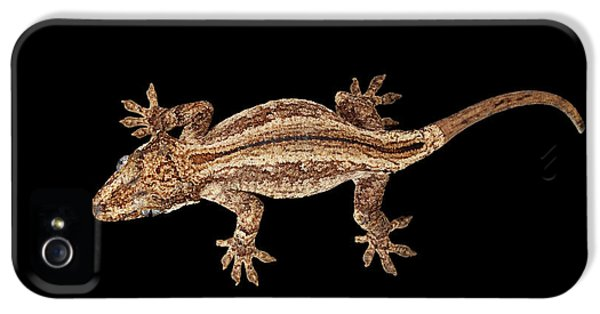 Top View Of Gargoyle Gecko, Rhacodactylus Auriculatus Staring Isolated On Black Background. Native T IPhone 5s Case by Sergey Taran