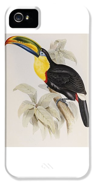 Toucan IPhone 5s Case by John Gould