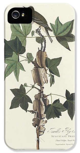 Flycatcher iPhone 5s Case - Traill's Flycatcher by Dreyer Wildlife Print Collections