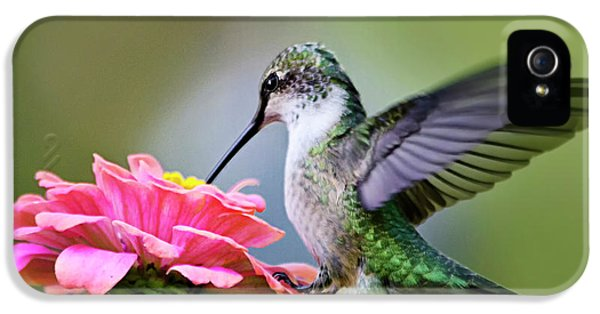 Humming Bird iPhone 5s Case - Tranquil Joy Hummingbird Square by Christina Rollo