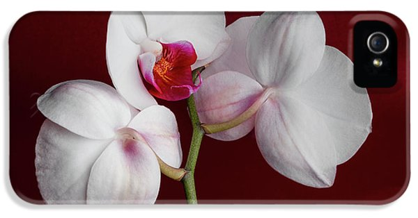 Orchid iPhone 5s Case - Trio Of Orchids by Tom Mc Nemar