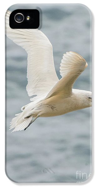 Tropic Bird 2 IPhone 5s Case by Werner Padarin