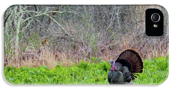 IPhone 5s Case featuring the photograph Turkey And Cabbage by Bill Wakeley