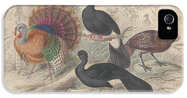 Turkeys IPhone 5s Case by Rob Dreyer