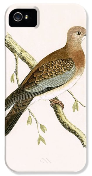 Turtle Dove IPhone 5s Case by English School