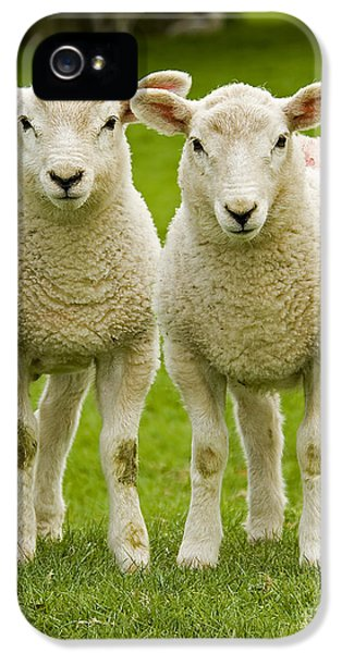 Sheep iPhone 5s Case - Twin Lambs by Meirion Matthias