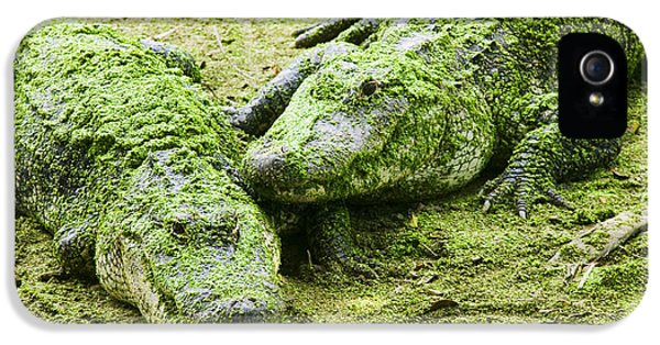 Alligator iPhone 5s Case - Two Alligators by Garry Gay