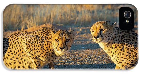 Two Cheetahs IPhone 5s Case by Inge Johnsson