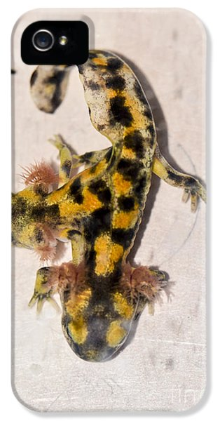 Two-headed Near Eastern Fire Salamande IPhone 5s Case by Shay Levy