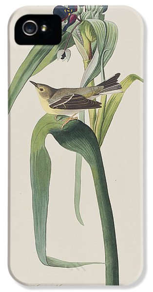 Vigor's Warbler IPhone 5s Case