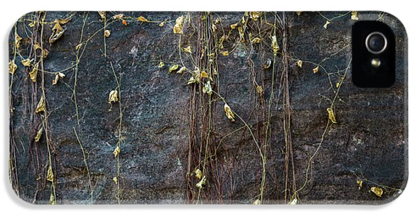 IPhone 5s Case featuring the photograph Vines On Rock, Bhimbetka, 2016 by Hitendra SINKAR