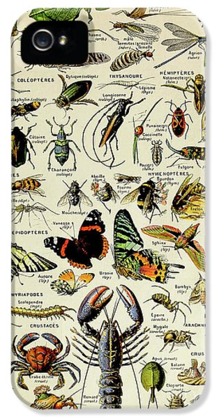Vintage Illustration Of Various Invertebrates IPhone 5s Case
