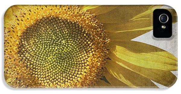 Sunflower iPhone 5s Case - Vintage Sunflower by Jane Rix
