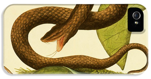 Viper Fusca IPhone 5s Case by Mark Catesby