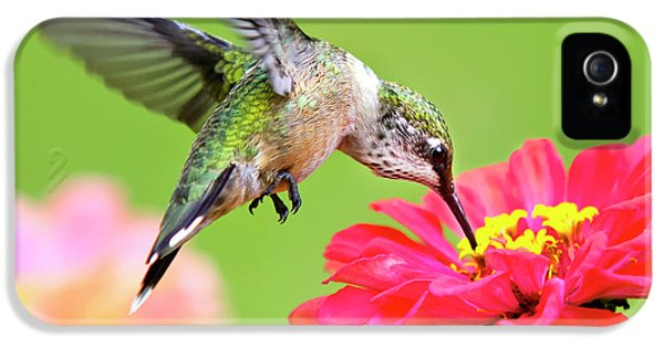 Humming Bird iPhone 5s Case - Waiting In The Wings Hummingbird Square by Christina Rollo