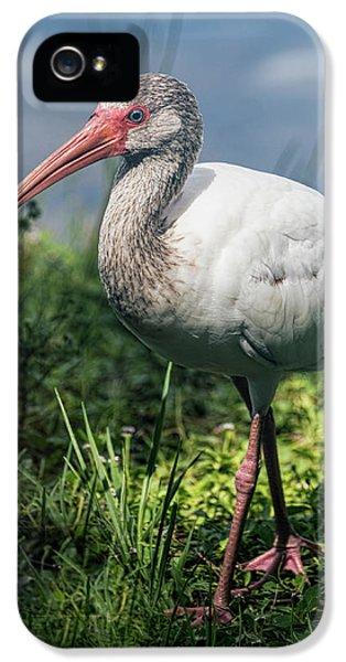 Walk On The Wild Side  IPhone 5s Case by Saija Lehtonen