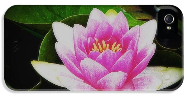 IPhone 5s Case featuring the photograph Water Lily by Karen Shackles