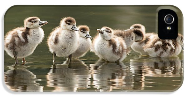 Goose iPhone 5s Case - We Are Family - Seven Egytean Goslings In A Row by Roeselien Raimond