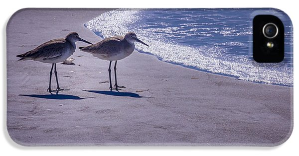 Sandpiper iPhone 5s Case - We Stand Together by Marvin Spates