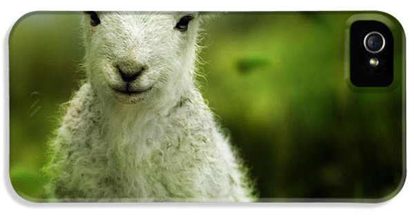 Sheep iPhone 5s Case - Welsh Lamb by Angel Ciesniarska