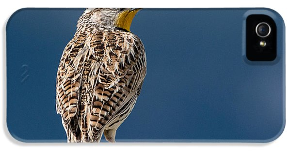 Meadowlark iPhone 5s Case - Western Meadowlark by Dawn Key