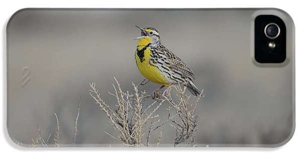 Meadowlark iPhone 5s Case - Western Meadowlark by Whispering Peaks Photography