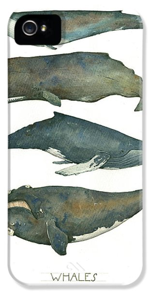 Whales Poster IPhone 5s Case by Juan Bosco