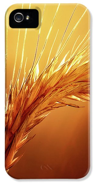 Macro iPhone 5s Case - Wheat Close-up by Johan Swanepoel