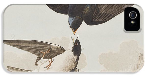 White-bellied Swallow IPhone 5s Case by John James Audubon