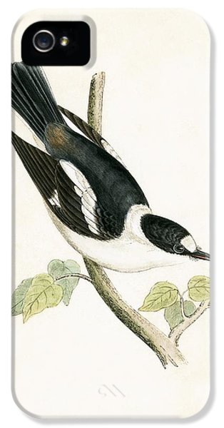 Flycatcher iPhone 5s Case - White Collared Flycatcher by English School