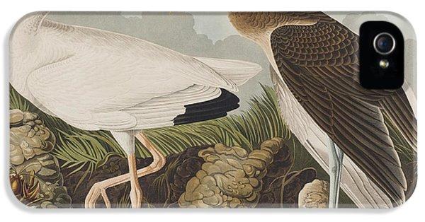 White Ibis IPhone 5s Case by John James Audubon