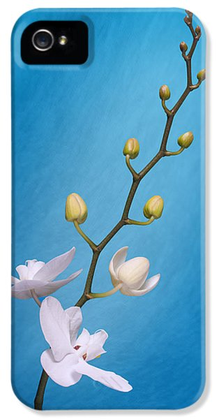 Orchid iPhone 5s Case - White Orchid Buds On Blue by Tom Mc Nemar