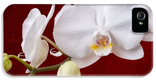 Orchid iPhone 5s Case - White Orchid Closeup by Tom Mc Nemar