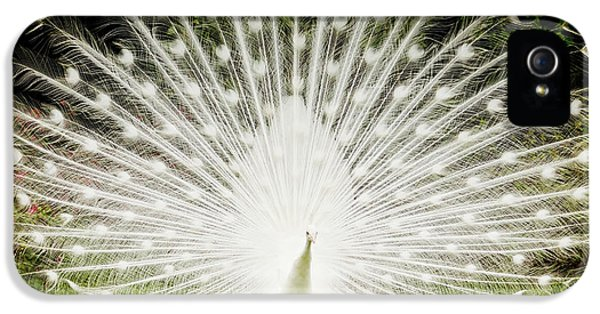 White Peacock  IPhone 5s Case by Dustin K Ryan