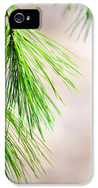 IPhone 5s Case featuring the photograph White Pine Branch by Christina Rollo